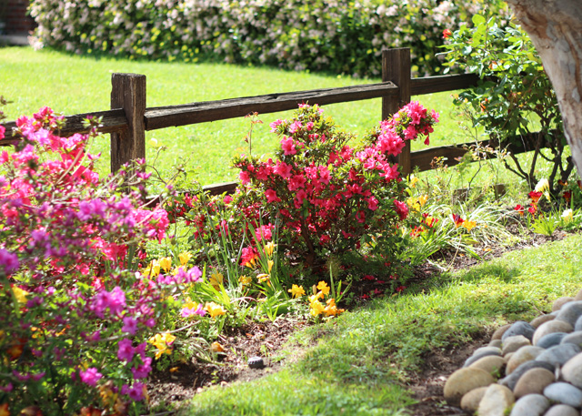 front yard spring