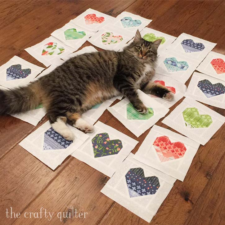 Zoe the cat helping out with the block placement at The Crafty Quilter
